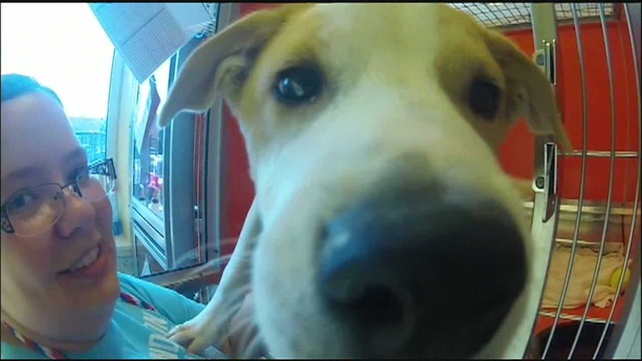 Animal rescue facilities all over the Kansas City metropolitan area said they're running at full capacity and most don't have room to take in more pets.