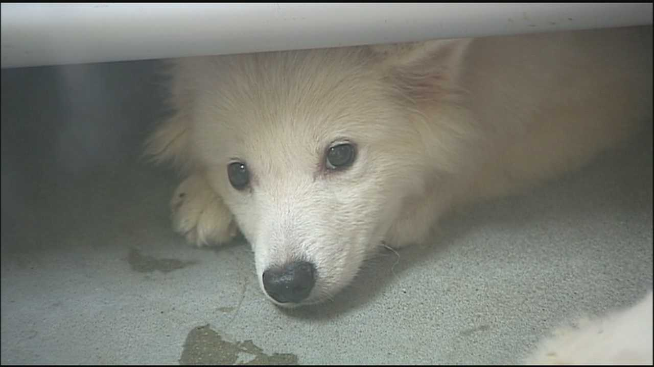Dozens of dogs removed from a home in rural Oak Grove on Wednesday are now getting food, attention and medical care at the Great Plains SPCA.