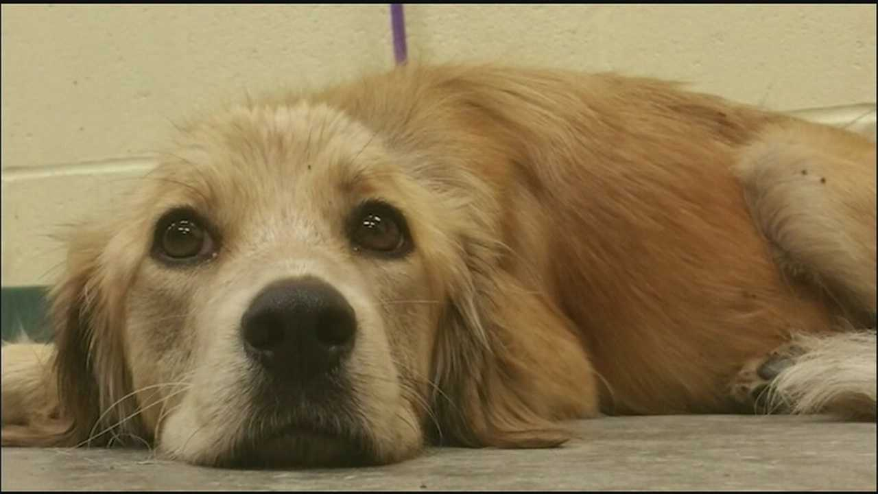 A dog that was thrown out the window and left for dead is making a slow recovery, still battling fear and hunger.