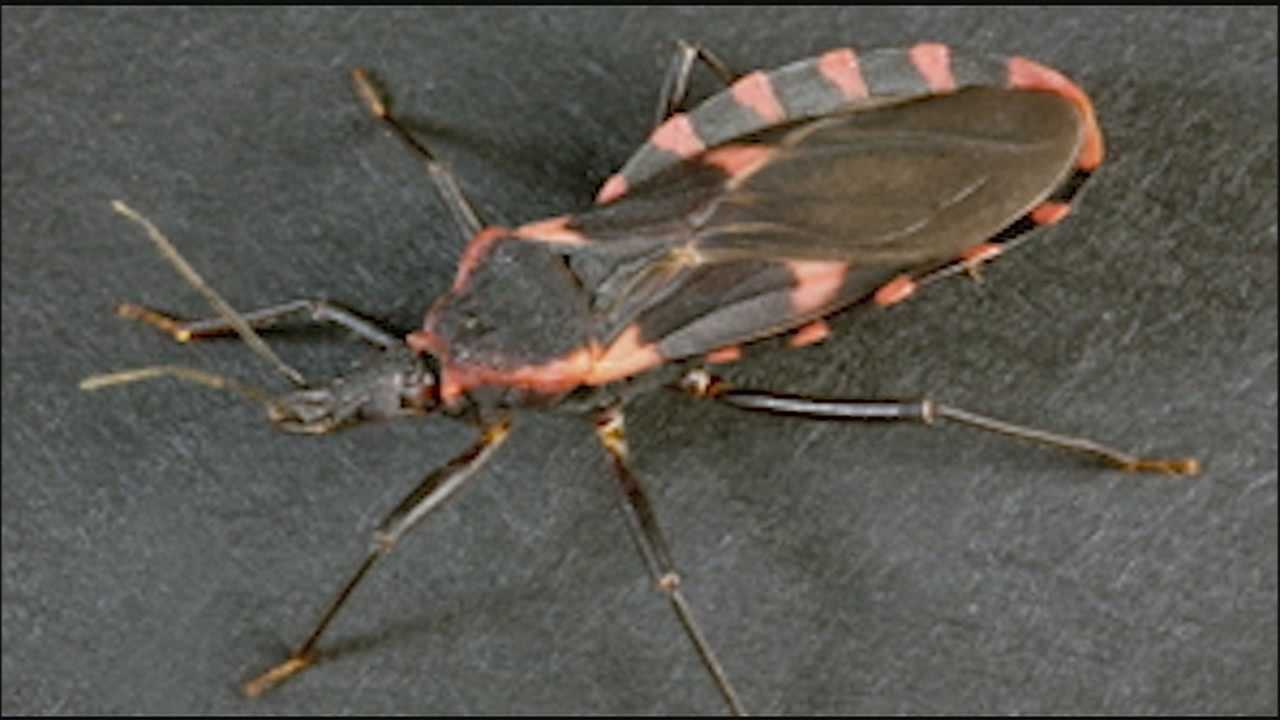 The Centers for Disease Control and Prevention have issued warnings in 26 states including Kansas and Missouri about an insect with a bite that could cause serious health problems.