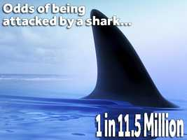You're more likely to be attacked by a shark than to win the lottery.