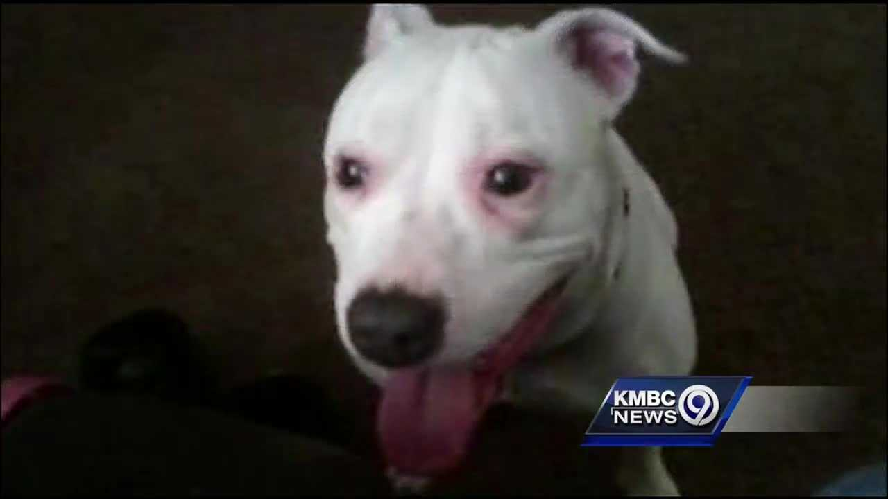 A Kansas City woman is looking for answers after she said police officers shot her dog when they didn't need to.