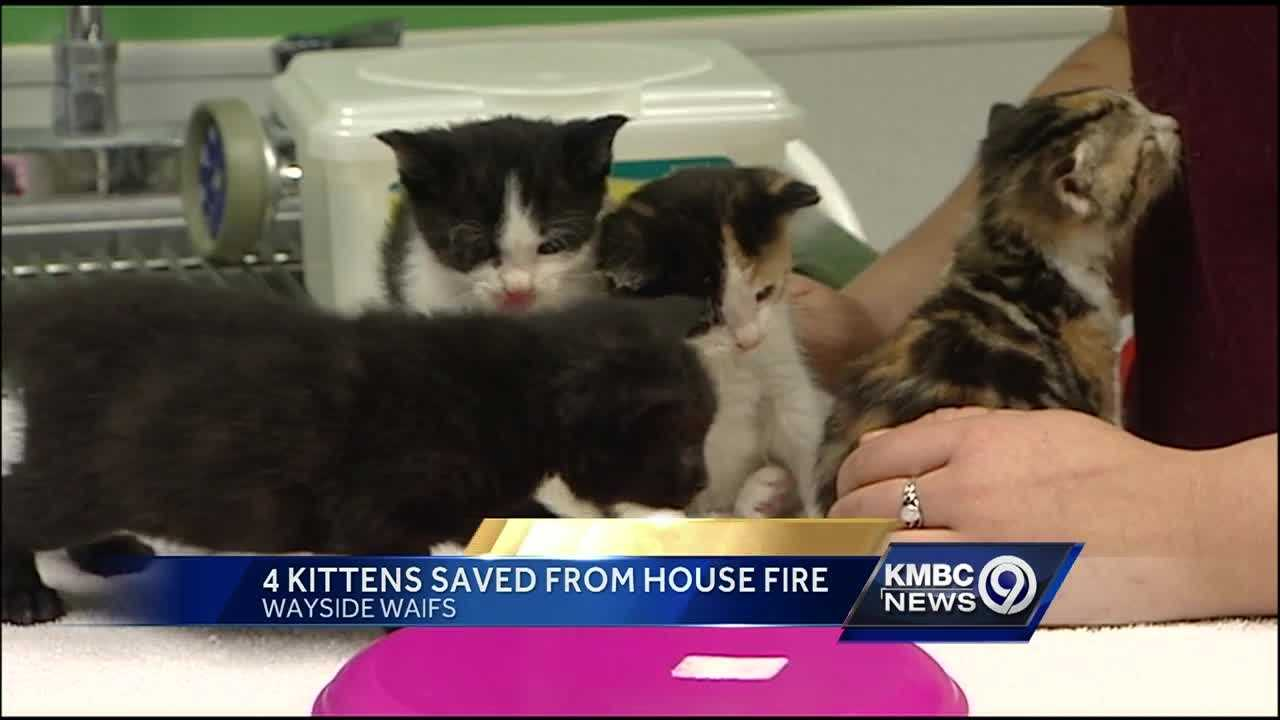 Kansas City's Wayside Waifs is now caring for four kittens who were orphaned in a house fire last weekend in Clinton.