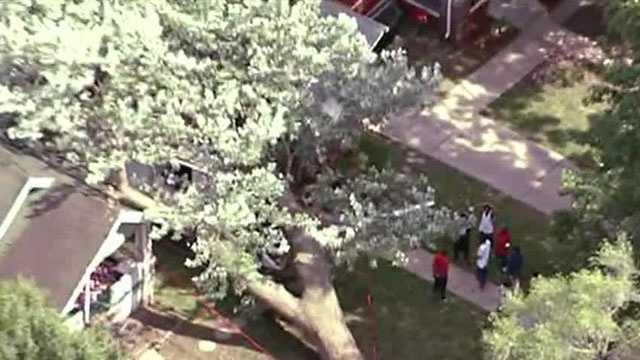 A Kansas City woman said she woke up from a nap after hearing a crackling sound -- and soon realized a giant tree was falling on her house.