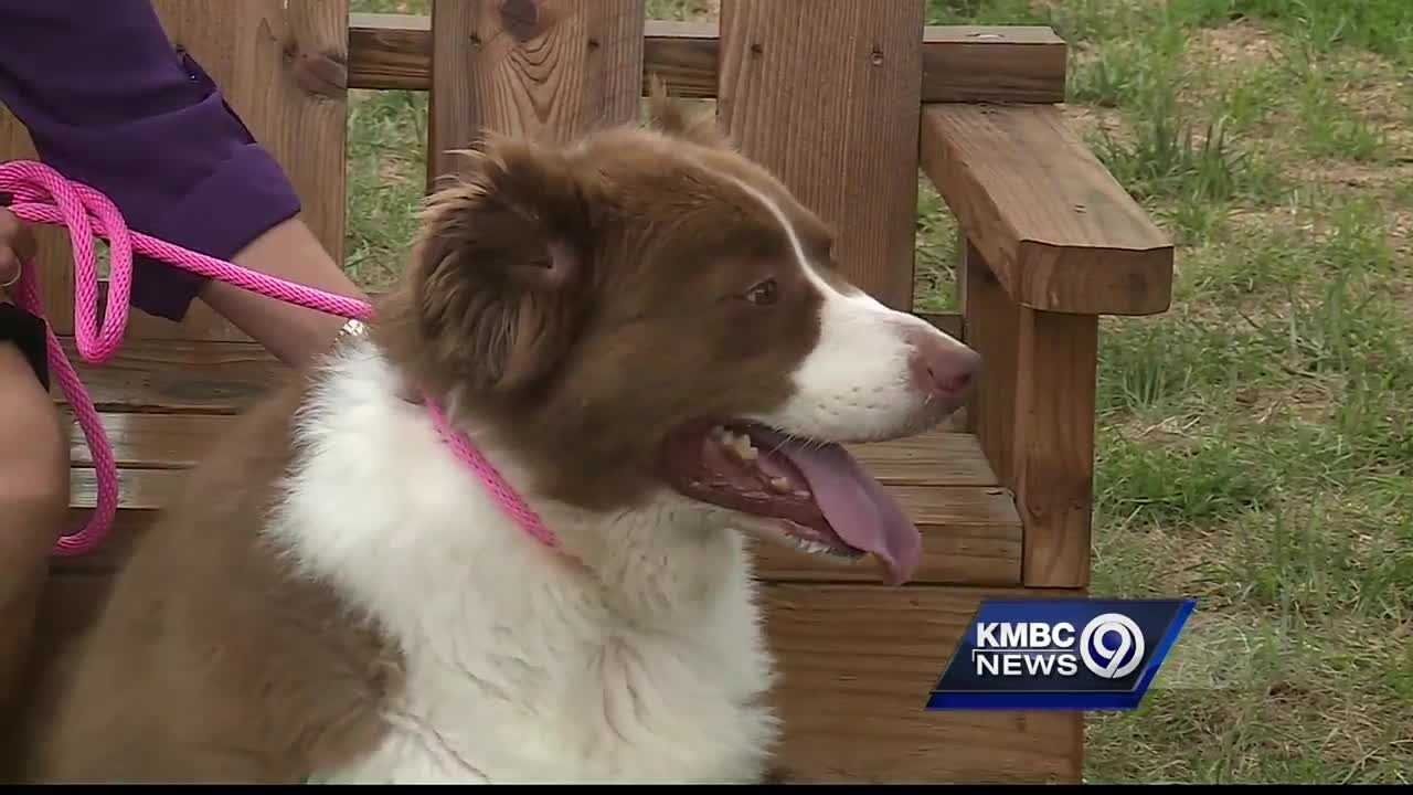 Great Plains SPCA is looking for a home for a large number of pets, but one particular border collie is getting a lot of attention.