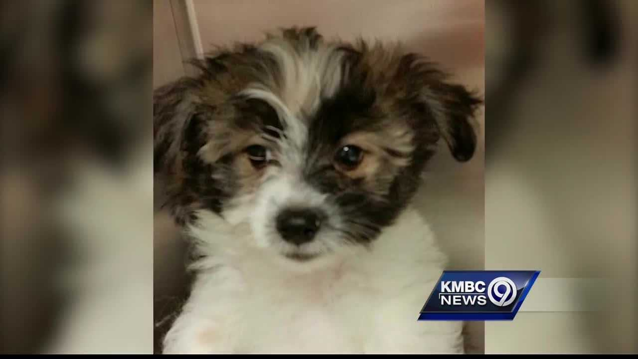 A Mission pet rescue and adoption center is looking for a stolen puppy.