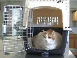 Mr. Meow has a hefty problem. The 2-year-old cat is probably one of the fattest in the world, according to officials at the Santa Fe Animal Shelter who are caring for him.