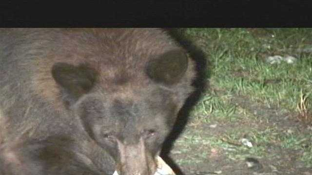 New Mexico braces for bear season