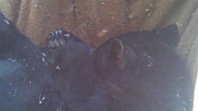 Web First: Bears released