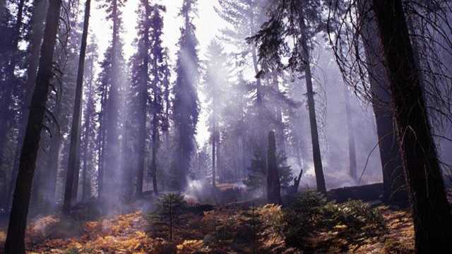 Wildfire forest generic