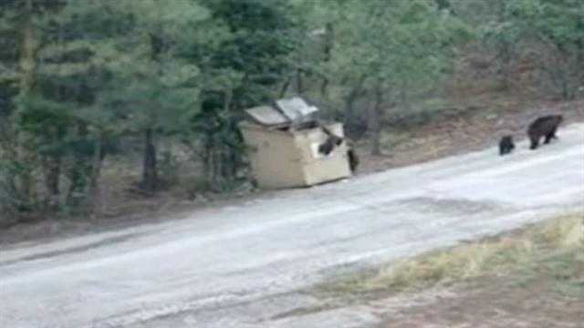 Caught on camera, three baby bears escape a Ruidoso dumpster.