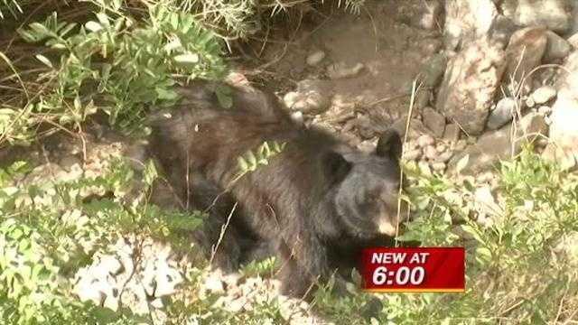 black bear in sf