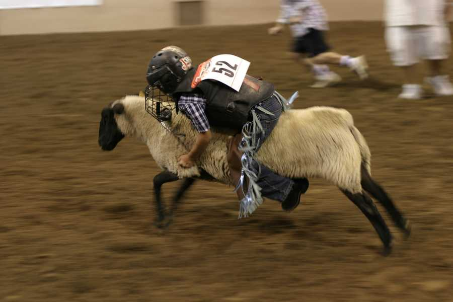 Friday, September 14: International Indian Final Rodeo begins at Tingley Coliseum, 7 p.m.
