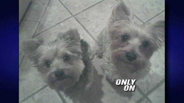 A southwest Albuquerque woman said seven of her Yorkies were stolen out of her backyard days before they were to be sold for thousands.