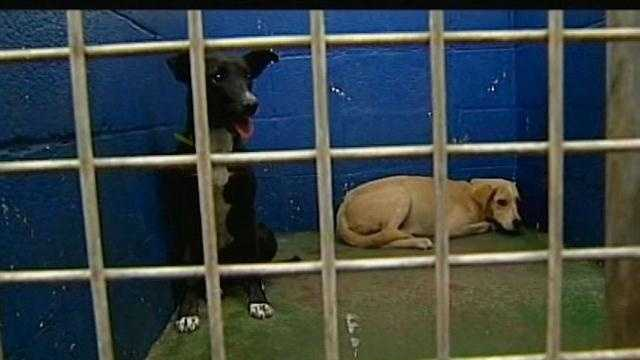 Animal control officers seized 33 dogs, including three puppies, that were tied to stakes without any food or water.