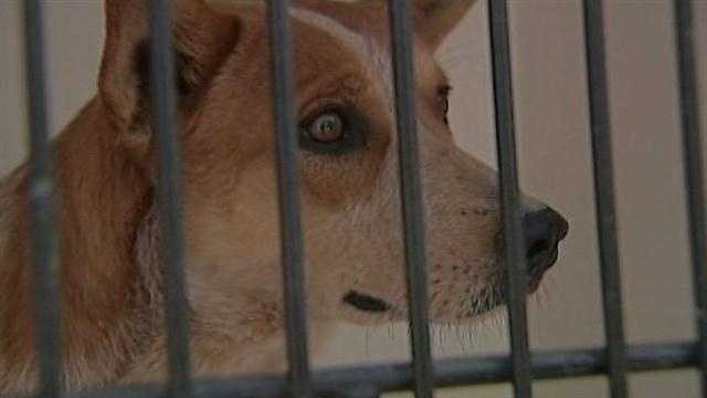 Two dozen dogs were found at a Valencia County home, and now their owner is behind bars.