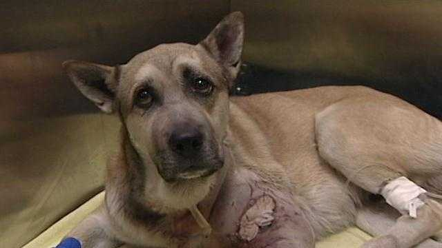 Authorities are pressing criminal charges after a dog suffers a vicious attack and his owner waits several days before getting any help.