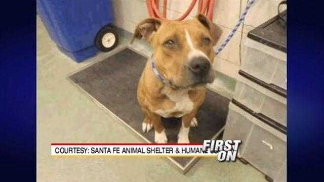 Two dogs are in police custody after officials said they bit several people and mauled a small dog to death. Now, those dogs may be put to death.
