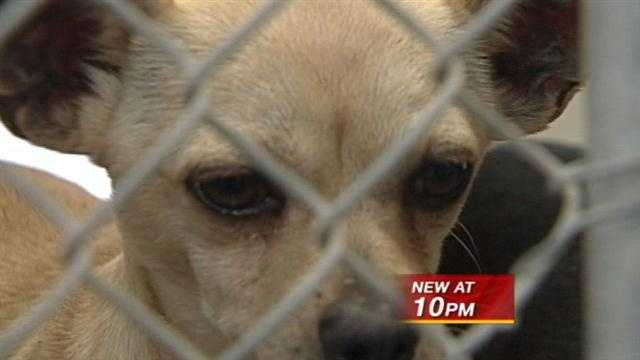 Albuquerque animal shelters say animals are being dropped off at their doorsteps during the holidays.