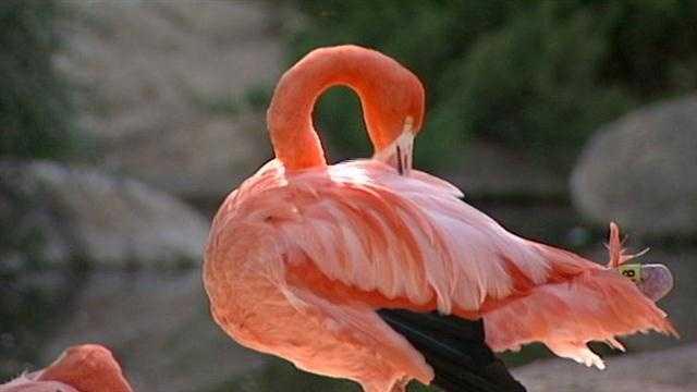Zoo BioPark Flamingo
