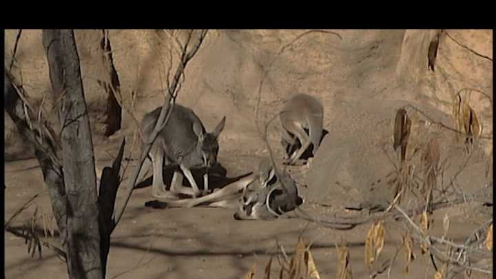 Kangaroo stills_11.jpg