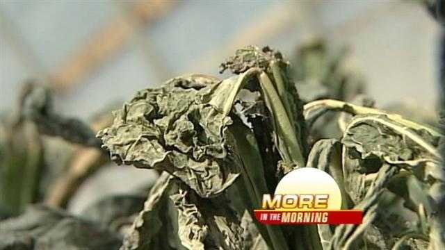 The extreme back and forth weather is killing crops and farmers say it could affect produce prices at the grocery store.