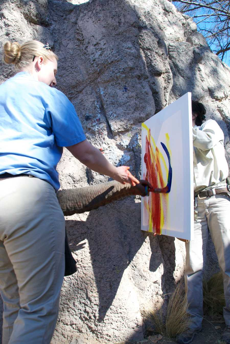 The following are past paintings made by elephants at the zoo.