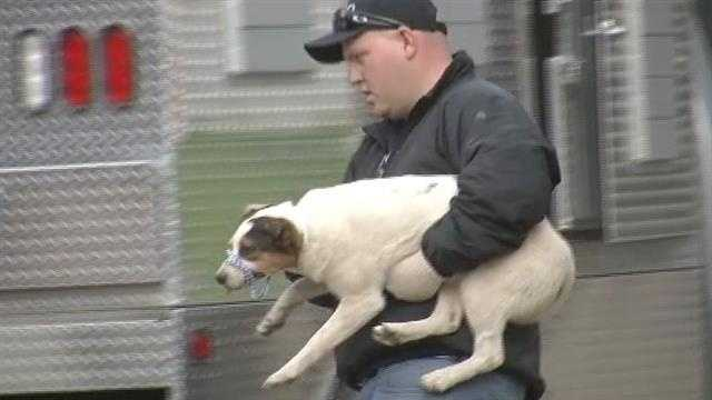 Tonight we have video of the nearly 50 dogs police confiscated from a former veterinarian home.