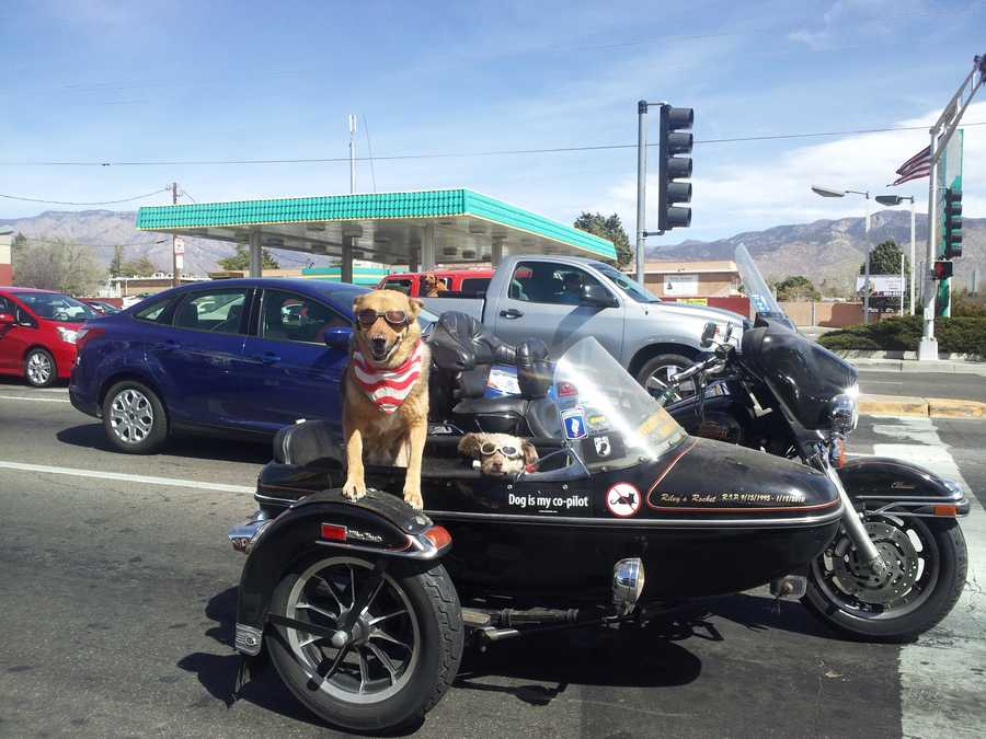 Priceline recently ranked Albuquerque, N.M. as the most pet-friendly city for travelers.