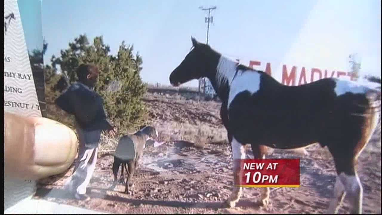 A tragic end for one horse's playful morning in Santa Fe.