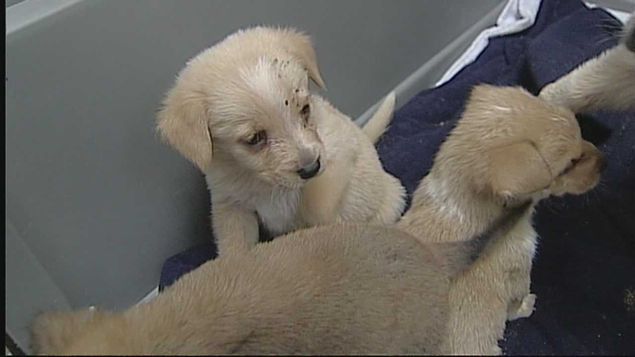 The Santa Fe shelter is caring for even more of the dogs found in a former veterinarian's home because several of them were pregnant.