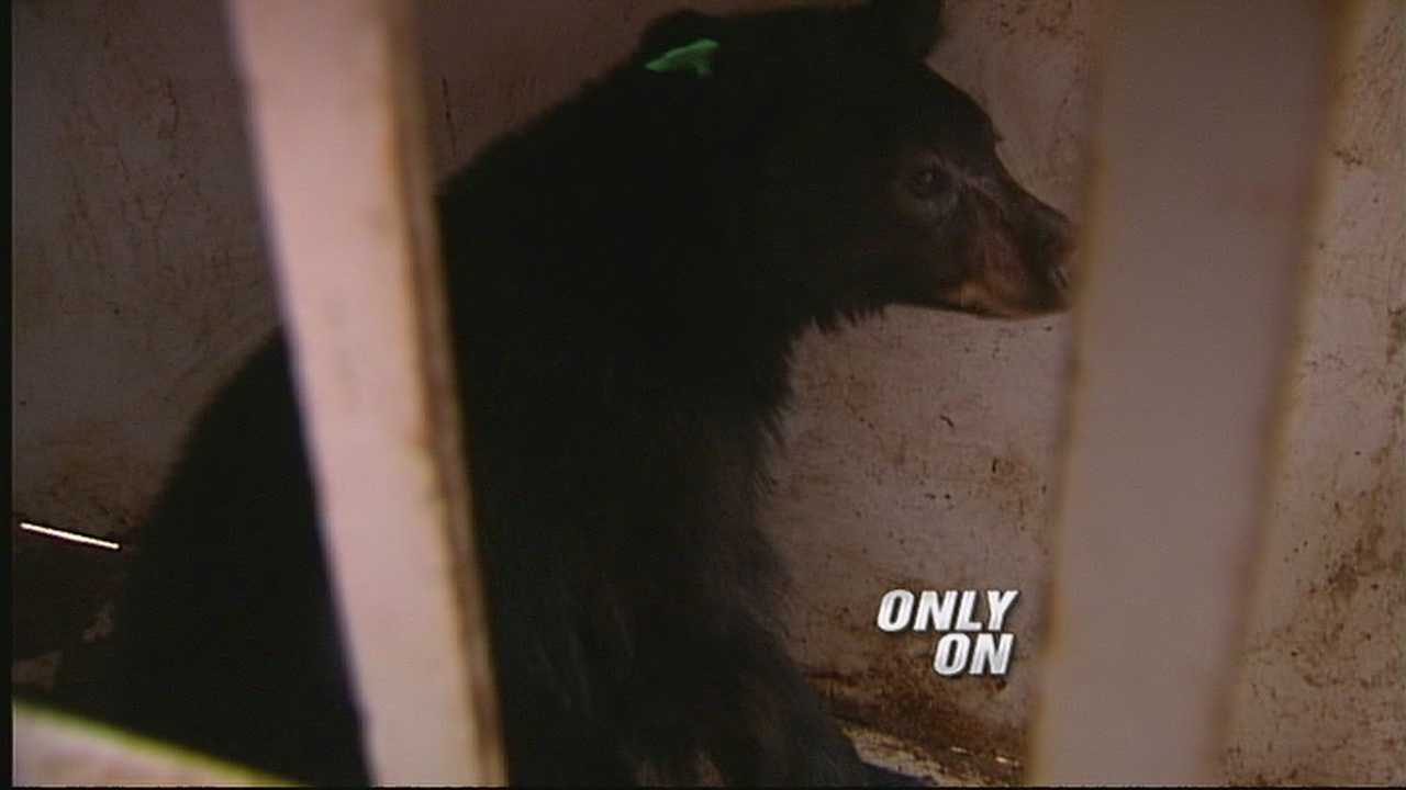 Officials say it's that time of year when bear sightings increase. And a neighborhood in rio rancho, got a rude awakening this morning.