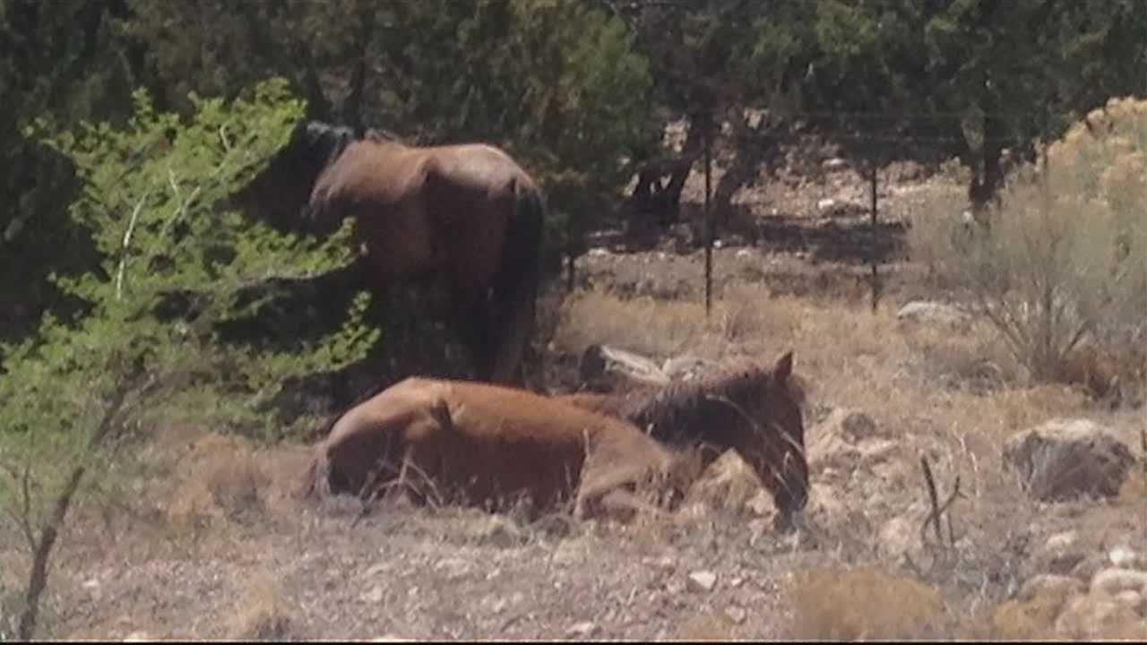 The fight to keep or get rid of wild horses in Sandoval County could go all the way to the attorney general.