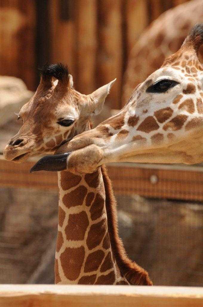 At birth, Abi was just shy of 6 feet
