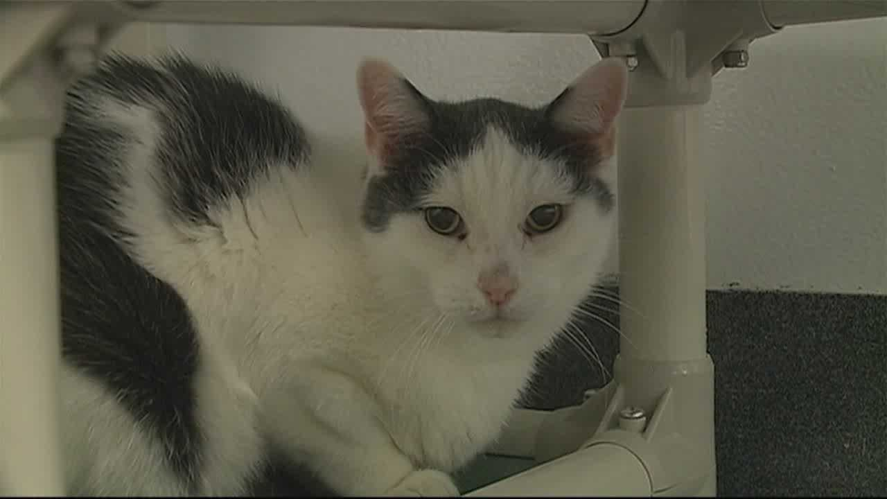 Number of older animals in shelters increasing