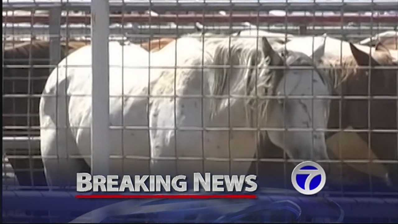 A federal judge has temporarily halted plans by companies in New Mexico and Iowa to start slaughtering horses next week.