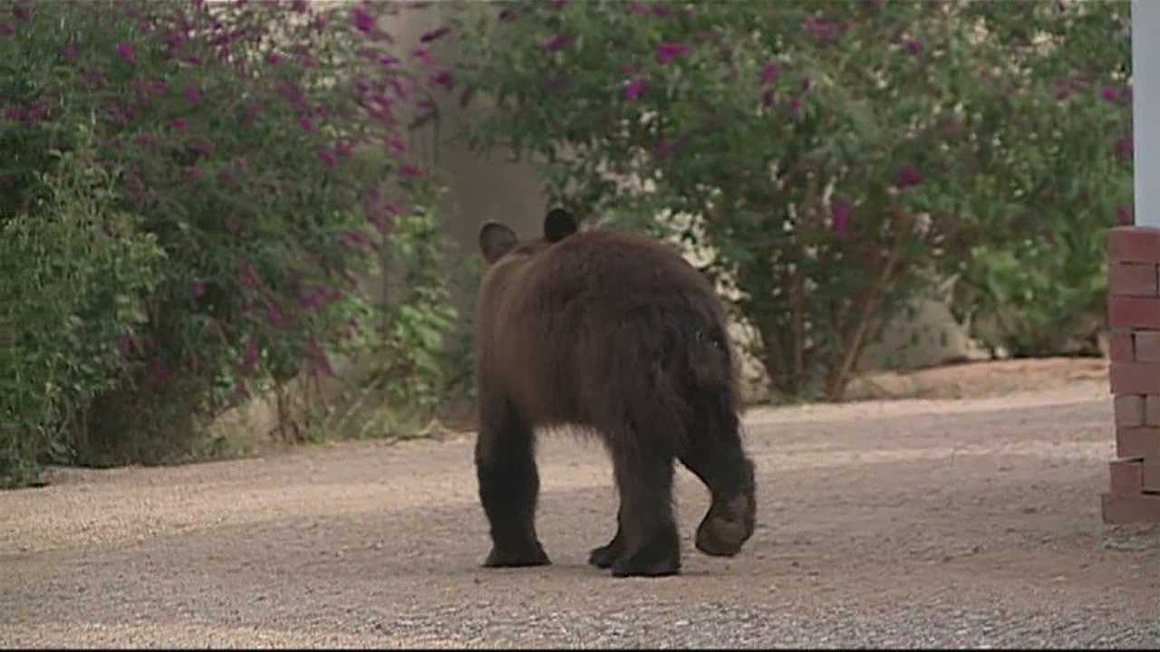 Members concerned mountains may lose bears