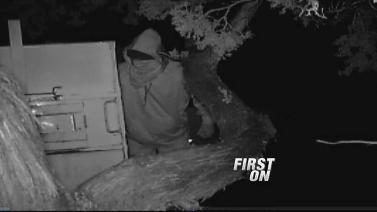 img-Bear trap tamperer caught on camera