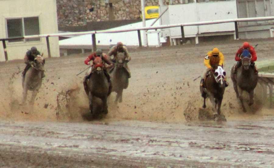 Sunday, September 15: 9:00 a.m. Quarter HorseShow NMSF Horse Complex