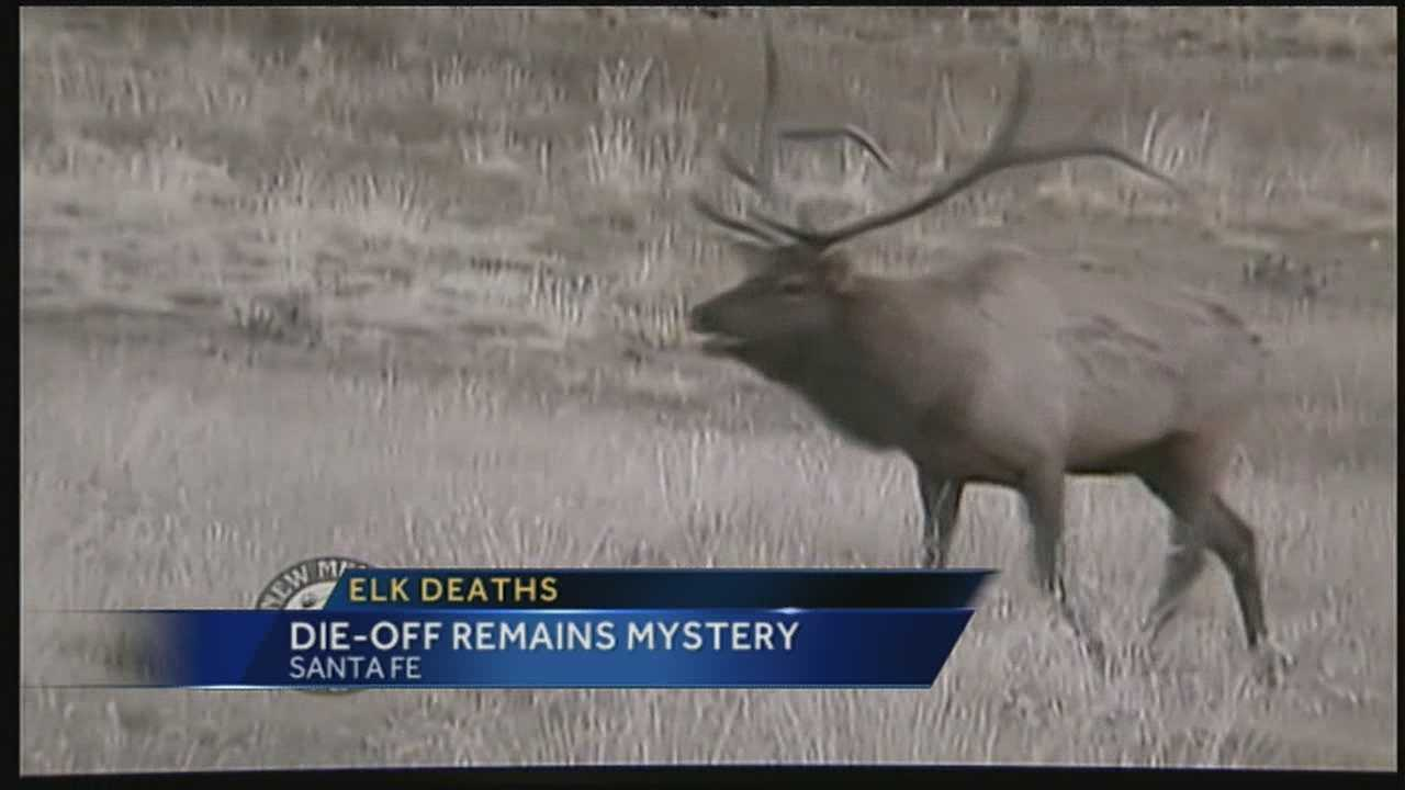 img-Death of elk herd could have great impact on state