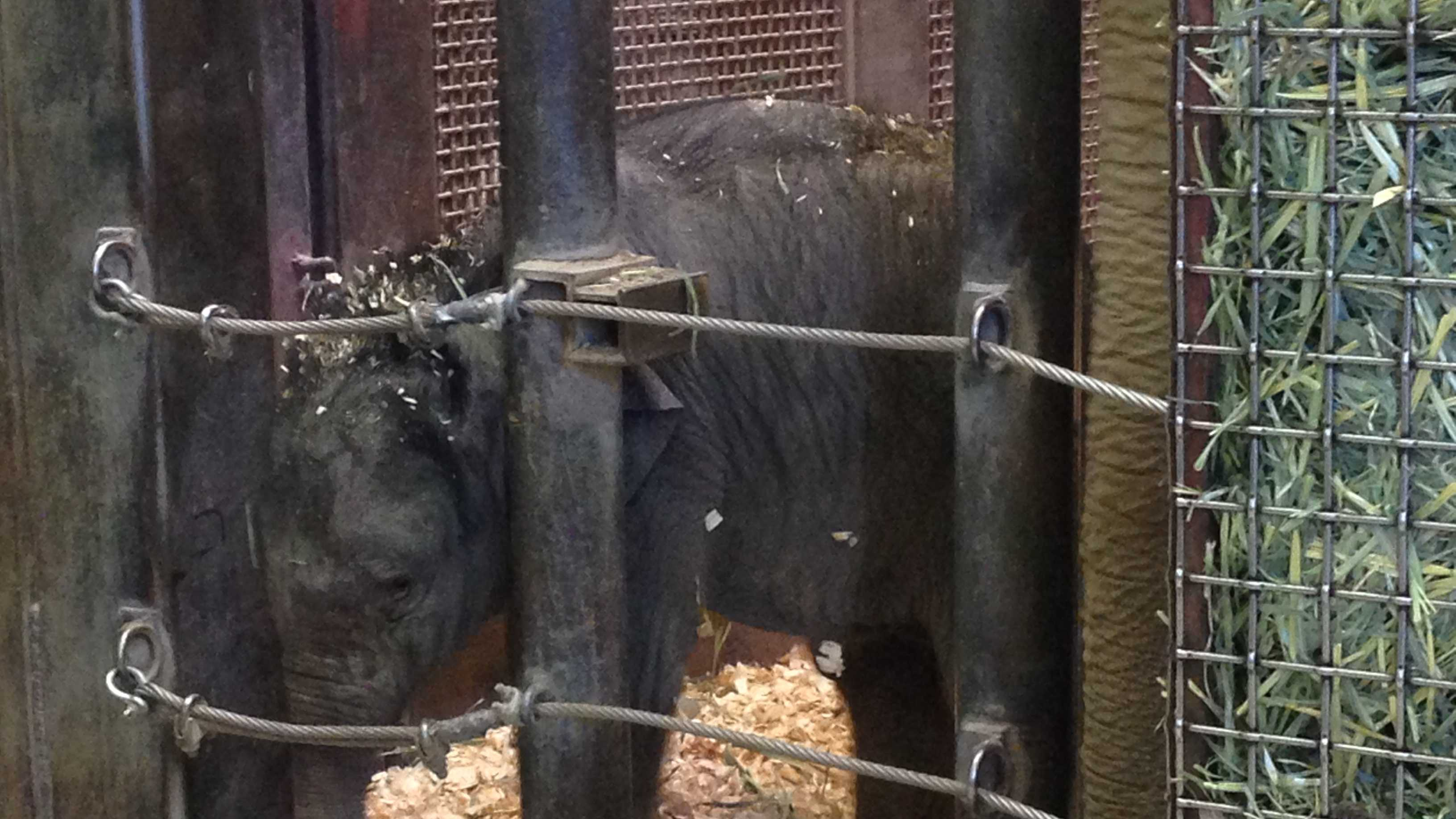 Albuquerque's zoo is welcoming the newest member of its elephant herd.