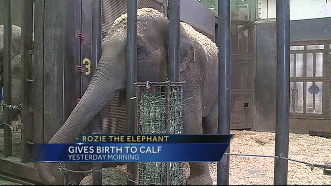 img-ABQ BioPark s baby elephant needs a name