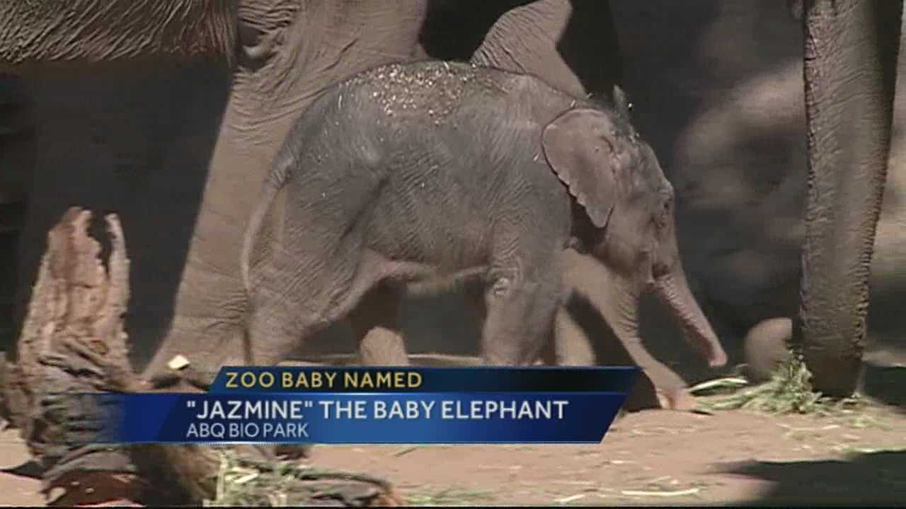 Albuquerque Bio Park's baby elephant received her new name, with voters selecting Jazmine for the 3-week-old female Asian elephant calf.