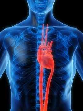 2. Heart Disease (3,224 deaths)