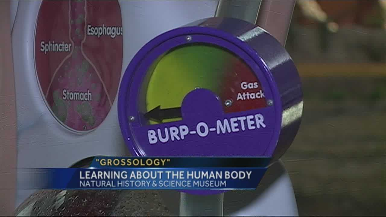 'Grossology' exhibit to open at local museum