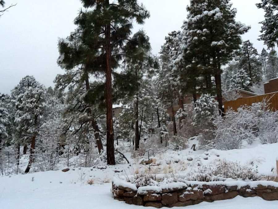Morning snow in Los Alamos, N.M.