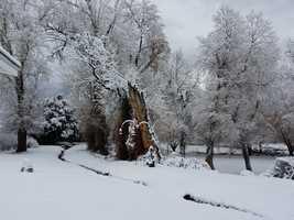 Snow in Questa, N.M.