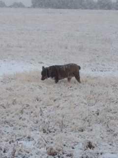 Snow in Rutherton