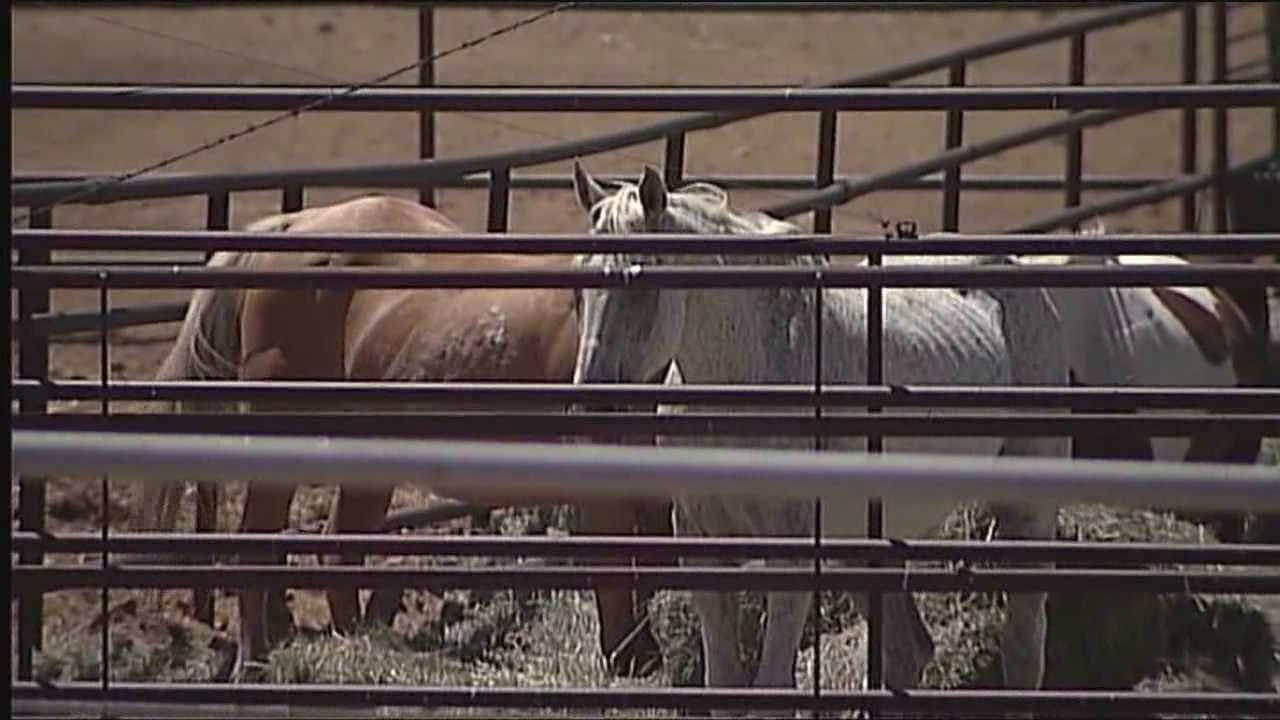 The owner of a Los Lunas livestock auction is not heading to jail despite facing 12 charges in connection to dying horses on his property.