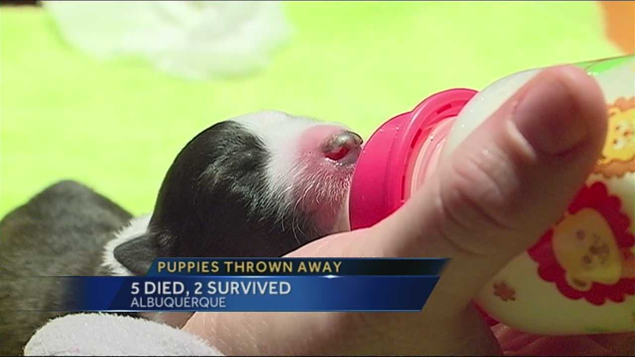 Newborn puppies thrown away